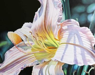 Salmon Lily