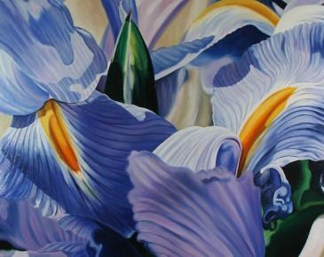 Blue Iris Medley