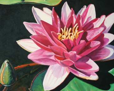 Pink Water Lily with Bud