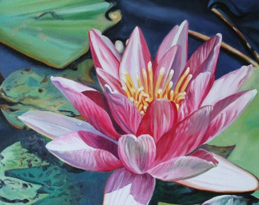 Pink Water Lily with Blue Water