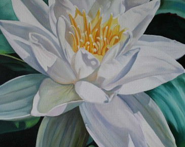 White Lotus (seen from above)