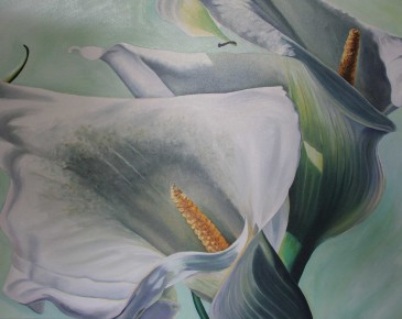 Two Calla Lilies (aqua background)